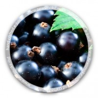 N.S Blackcurrant
